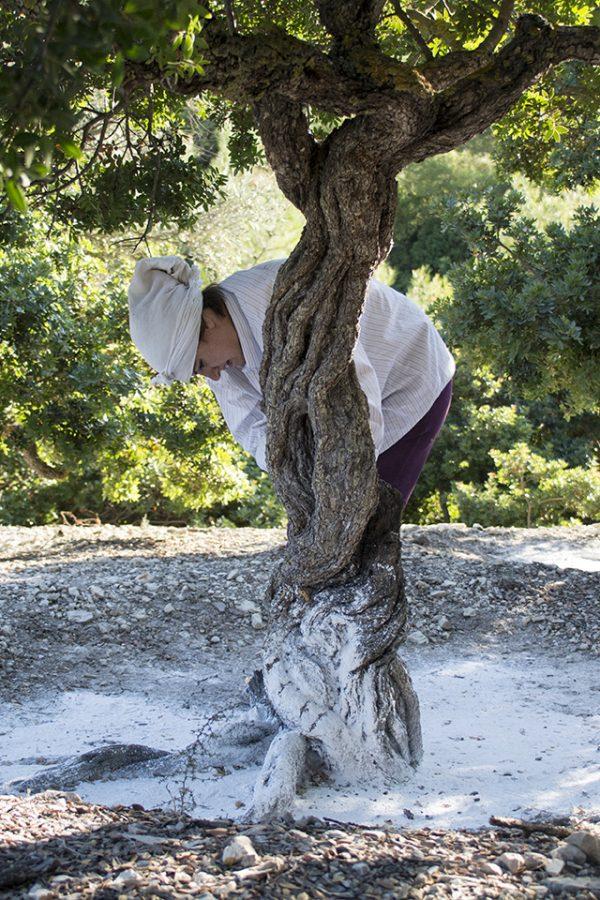 Adopt Chios Mastiha Tree